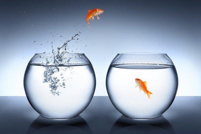 Lavorare in proprio: idee e consigli per aprire la Partita IVA